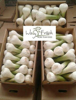 fresh white garlic natural pure