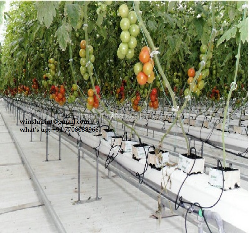 COCOPEAT GROW BAGS FOR TOMATO FARMING