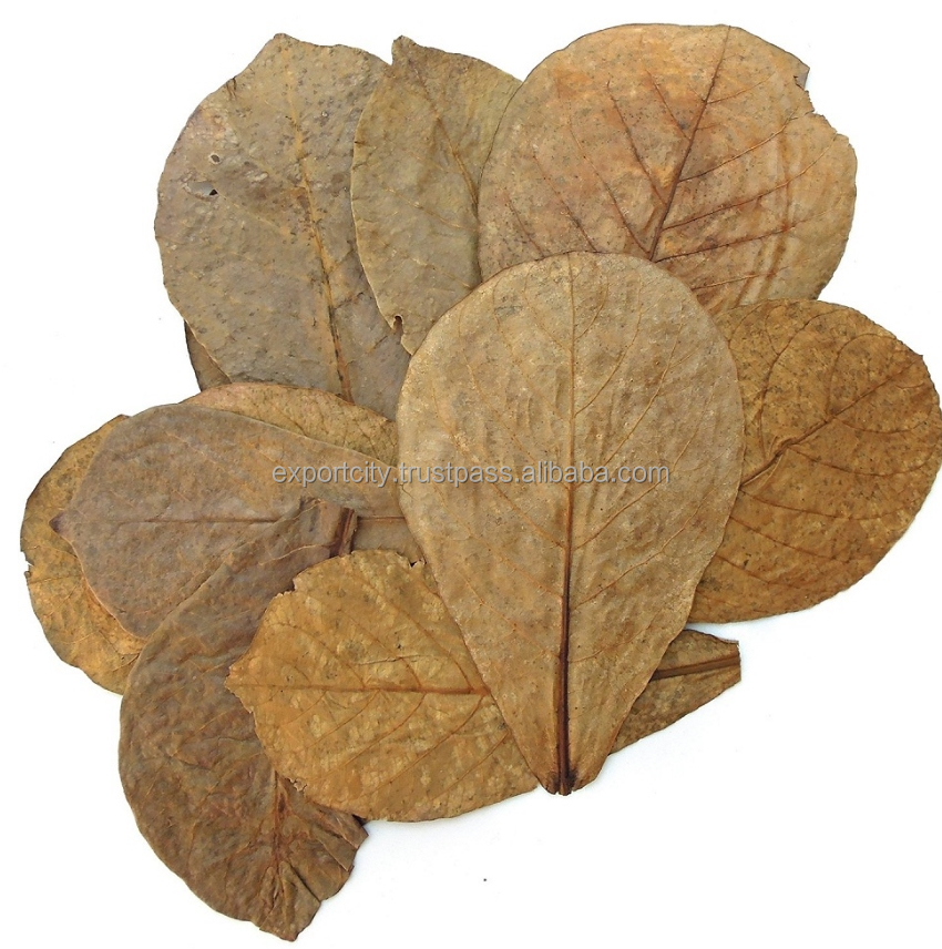 Dried Almond (catappa) leaves for aquatic fish and shrimp (XL 18-30cm, 7-12 inch)
