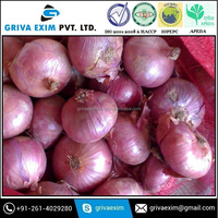 Red Nasik Onion