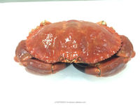 EDIBLE CRAB, RED STONE CRAB