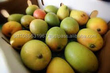 Fresh Mango Fruit Exporters from South Africa