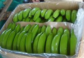 Fresh grade A Green Cavendish Bananas for sale