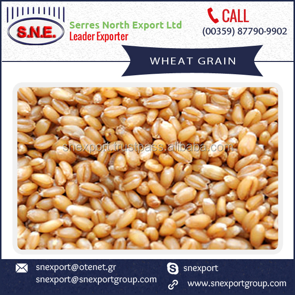 Wholesale and Organic Bulk Wheat from Big Brand Company