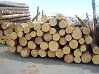 Quality European Pine/Spruce Logs available for sales