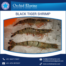 Wide Range of Good Quality Delicious Black Tiger Shrimps for Bulk Purchase