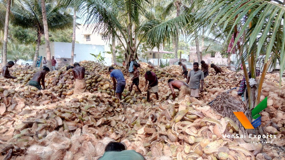 Fresh Coconut Importers In Uae