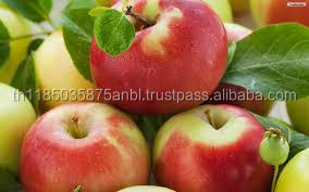 wholesale bulk apples fresh THAILAND apples for sale