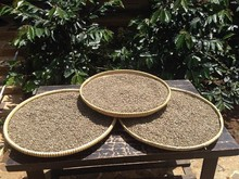 100% Pure Wild Kopi Luwak Arabica Coffee Green Bean from Java Preanger Indonesia - 40 kg