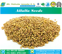 Medicago Sativa/Alfalfa Zaad Uit India