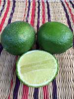 GREEN SEEDLESS LIME DIRECTLY FROM FARMERS