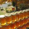 Best Quality Raw Honey