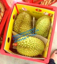 FRESH DURIANS monthong from vietnam