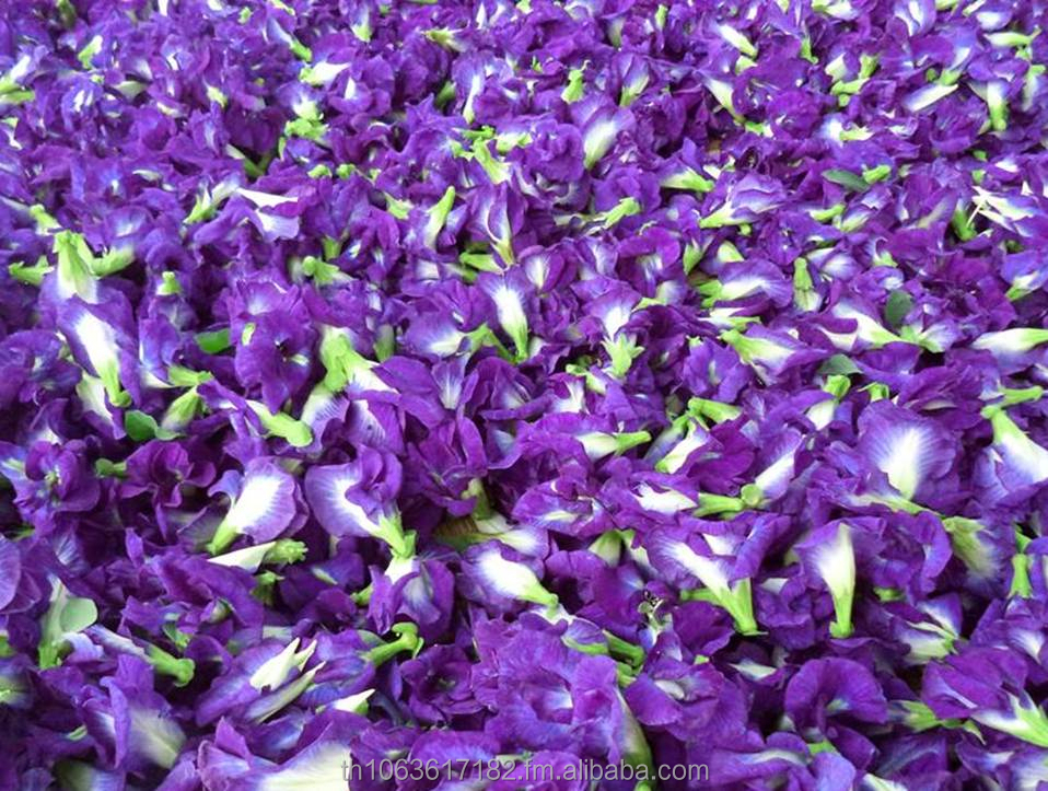 HIGH QUALITY NATURAL HERB GRADE A DRIED BUTTERFLY PEA FLOWER VIOLET TEA THAI HEALTHY HERBAL ORGANIC FOR SALE