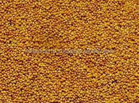 High Quality Clover Seeds Available for Sale