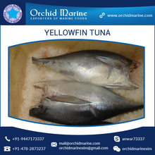 100% Fresh H&G Yellowfin Tuna Price