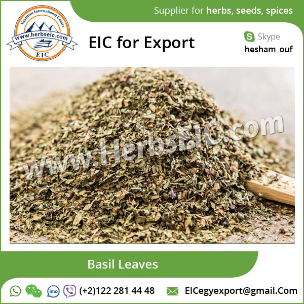 Premium Quality Basil Leaves from Egypt at Low Price
