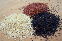 Wholesale Manufacture Raw Sprouted Quinoa Grains for Bulk Buyer - organic