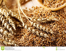 wheat grains for sale