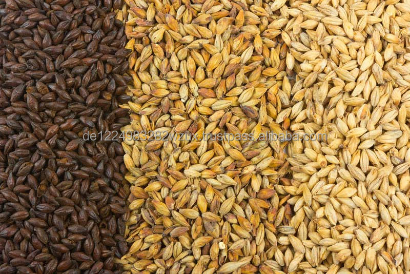 Trusted Supplier Supplying Best Organic Malted Barley for Beer Production