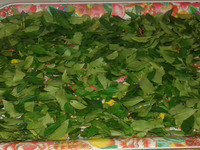 curry leaves / Fresh Curry Leaf