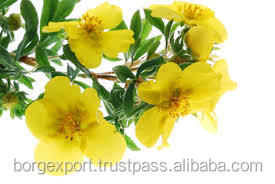 Evening Primrose Oil (OEM/ODM) | Evening Primrose Oil From India / natural Evening Prim rose Oil