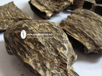 Vietnam High Quality Agarwood Plantation for sale