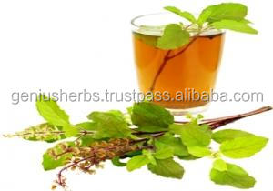Health and medical tulsi tea for healthy life