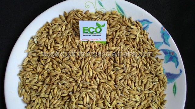 Barley for Beer manufacturing and export