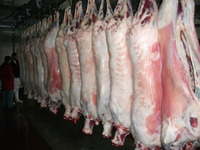 Halal Frozen Beef - goat meat - mutton - chicken and various parts