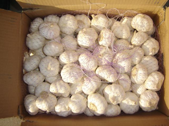 Fresh Garlic 6.0CM