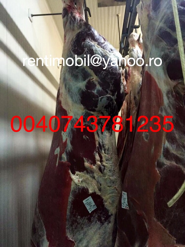Halal Beef carcass and cutts