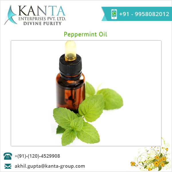 Best Peppermint Essential Oil at Low Price Bulk Peppermint Oil
