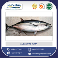 Wholesale Frozen Seafood Albacore Tuna Fish at Good Price