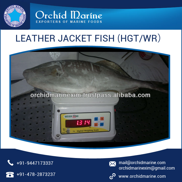 High Protein Long Shelf Life Fresh Leather Jacket Fish
