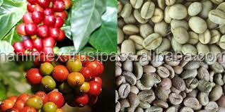 PRICE of Robusta Coffee Green Bean Crop 2015 for importers (Viber and Whatsaap: 0084965152844)