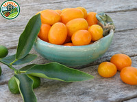 New Crop IQF Frozen Kumquat Fruit, Frozen Fruit Manufucture With 100% High Quality Fom Vietnam Kumquat Fruit