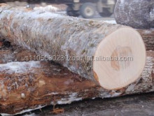 Southern Yellow Pine Logs