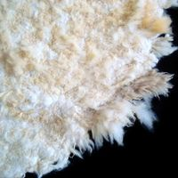 Raw Wool, Merino Wool, Greasy Wool For Sale