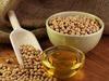 Vegetable Oil Extract / Soybean Seeds Oil forsale at a low rate