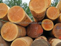 Teak wood logs and tropical timber logs