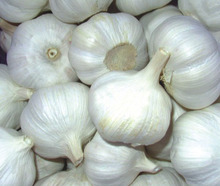 Good quality pure white garlic