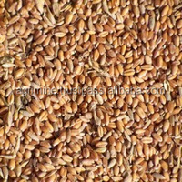 FEED GRADE WHEAT FOR ANIMALS