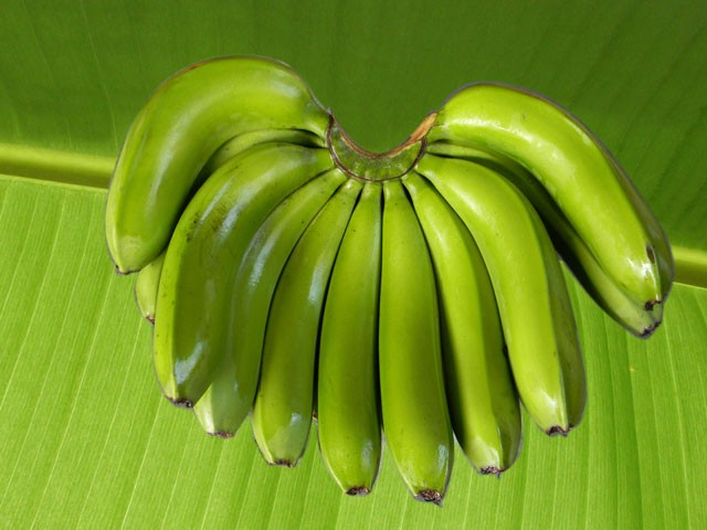 Cavendish Banana with high quality for sale and export