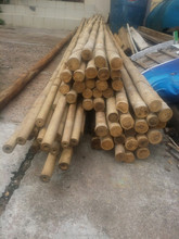 TOKIN BAMBOO POLES FOR AGRICULTURE- TREES SUPPORTING- JN