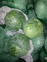 Green Cabbage Suppliers