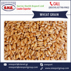 Premium Quality Wheat Grain for Animal Feed from Top Manufacturer at Best Price