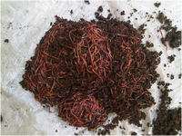 EARTHWORM COMPOST / WORMVERMI MANURE / EARTHWORM ORGANIC FERTILIZER