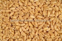 SPECIAL GRAIN WHEAT FOR HUMAN CONSUMPTION