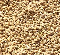 Animal feed barley from Russia in hot supply